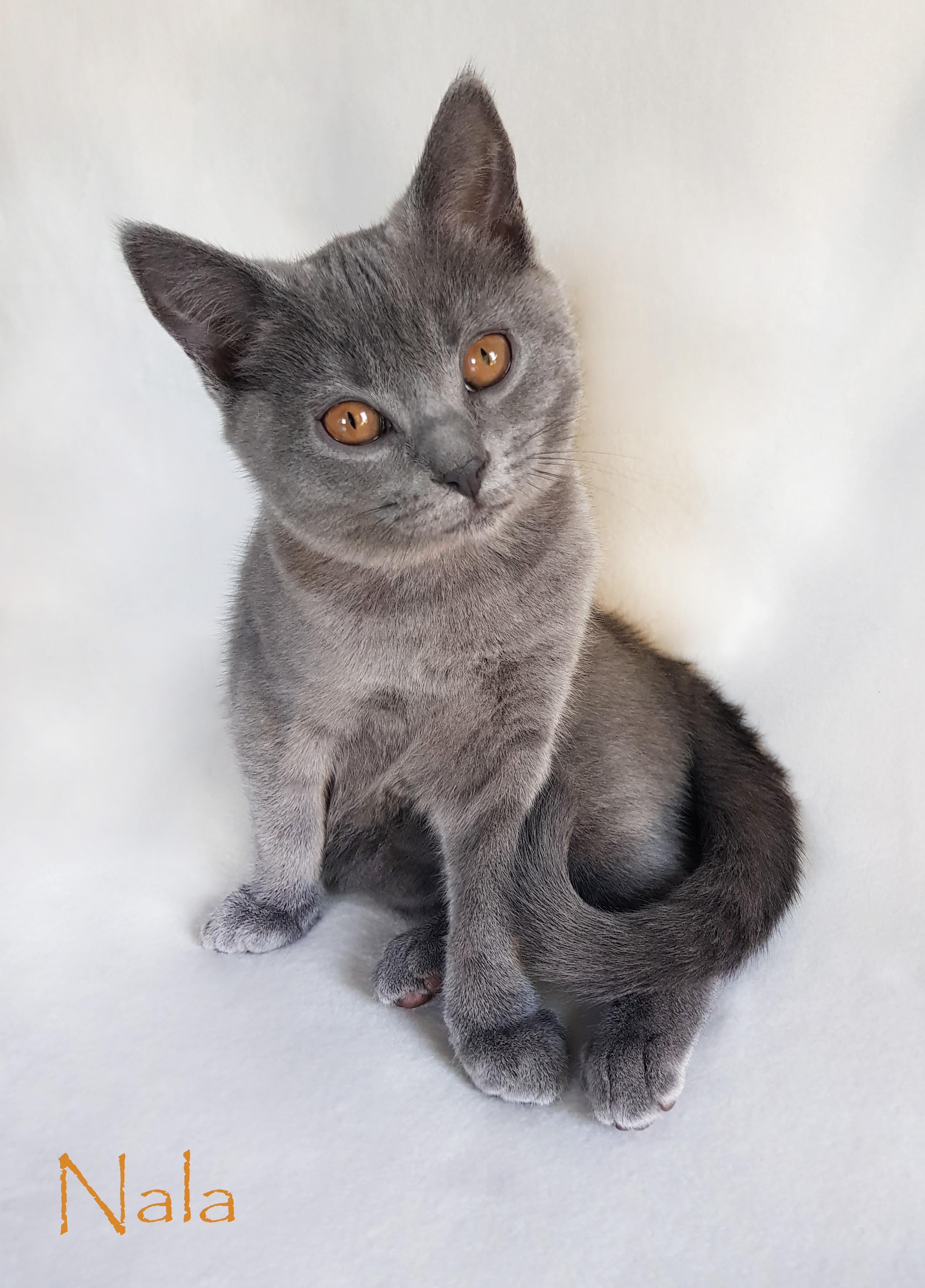 Maddison s kittens 2017 – MasterPlan Cats